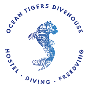 train with ocean tigers dive house in cabo