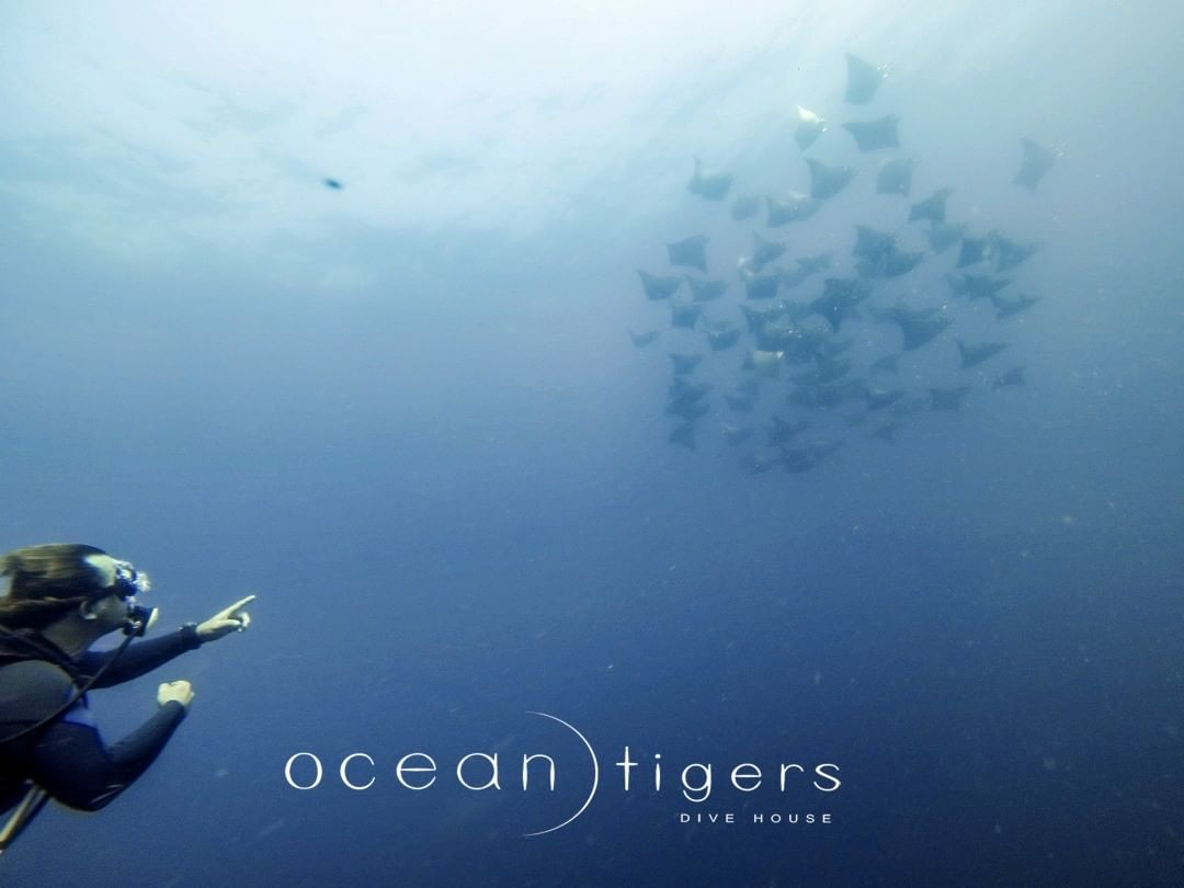 ocean tigers Divehouse diving in Cabo San Lucas Mexico Advanced Open Water